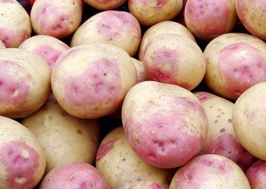 Картофель Выставочный Бонни Bonnie Potato