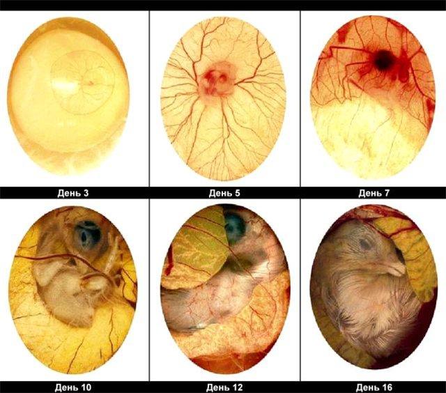 как лучше выявить паразитов в организме человека