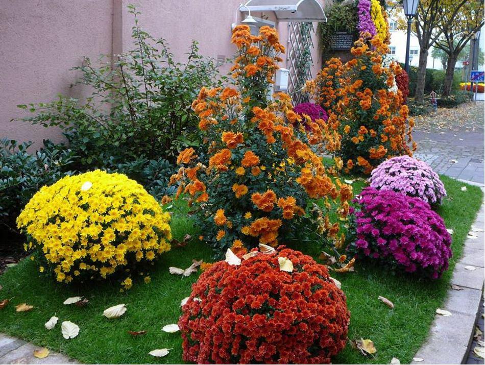 Фото цветы многолетние для сада