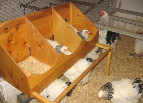 Как сделать гнезда для кур-несушек