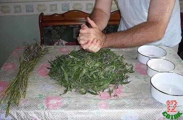 Как заготавливать иван чай в домашних условиях